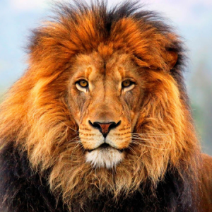 Andrew-Harvey-Lion
