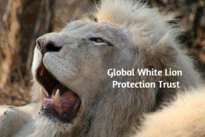White Lion Protection Trust